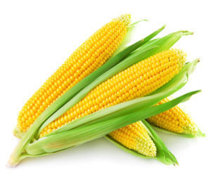 An ear of corn
